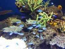 水族館2.png